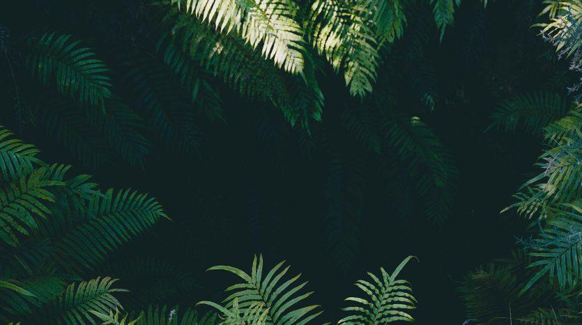 ferns natural